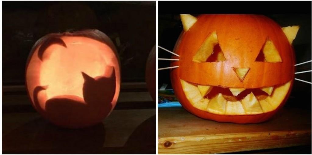 'I'm a cat, duh?'