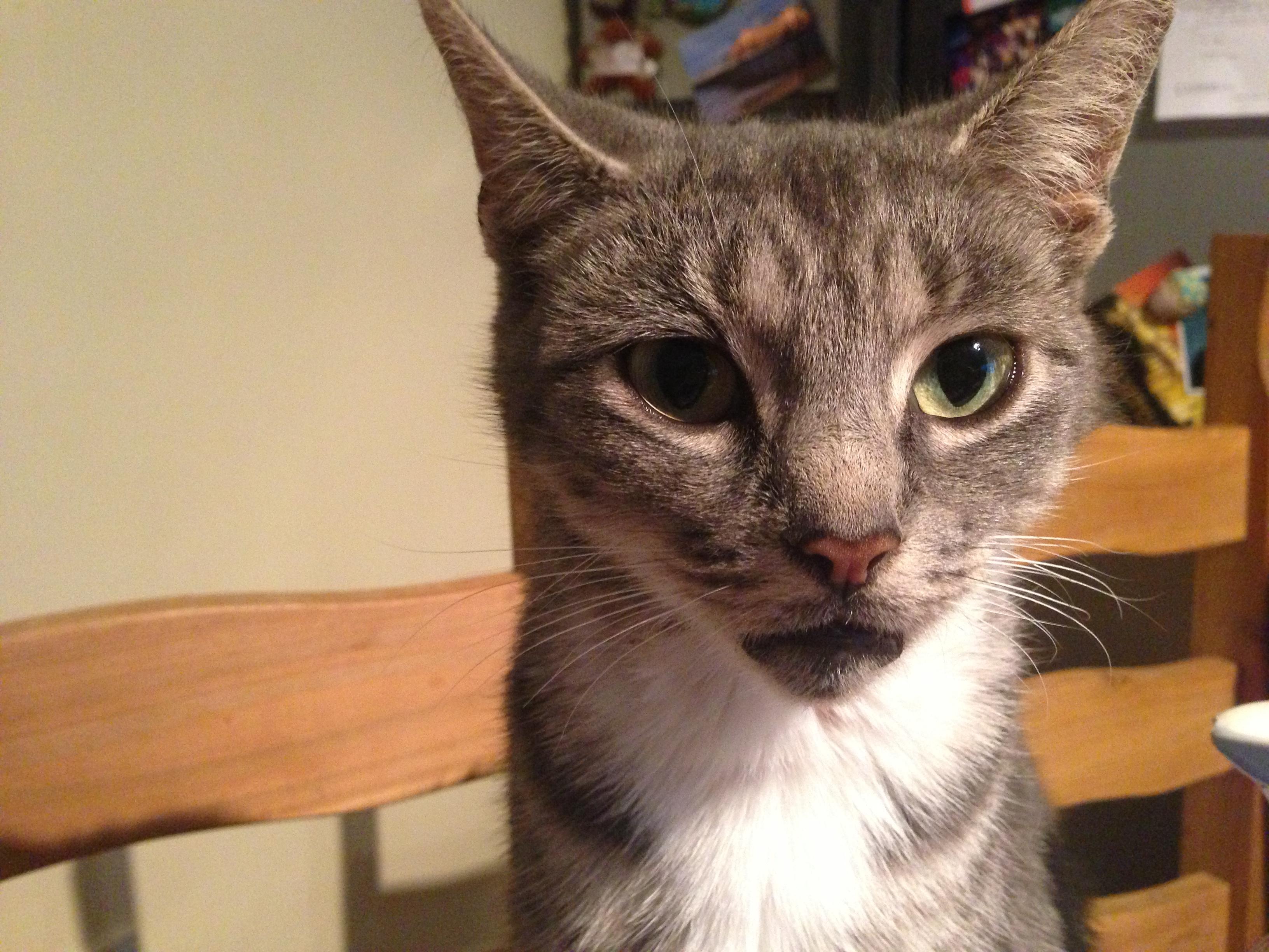Mum cat - what a slut