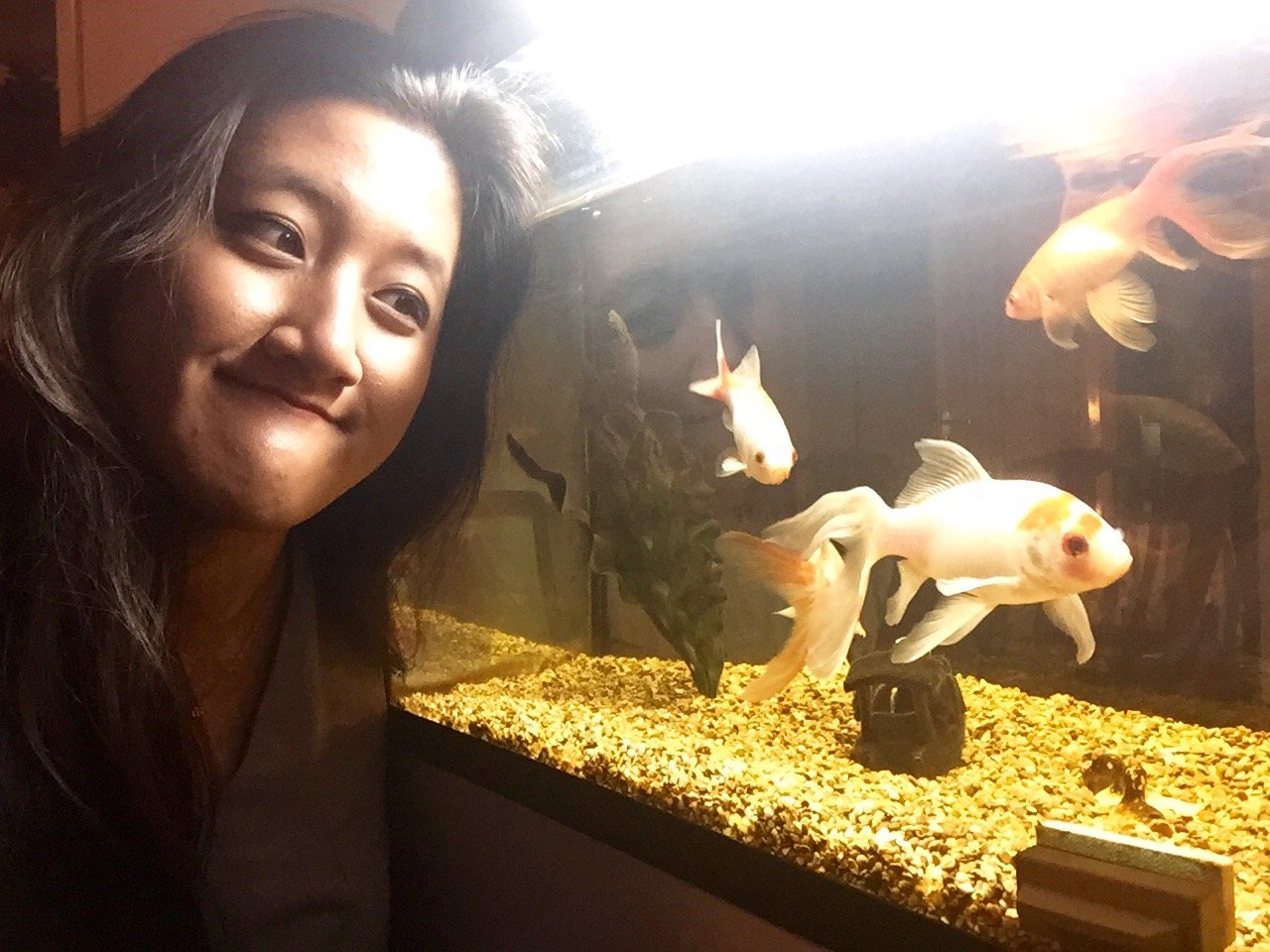 """""""My pets just don't understand me at all - it's like they have the memory of a goldfish."""""""
