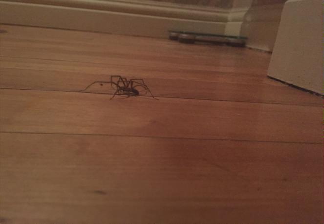 Approaching its prey...