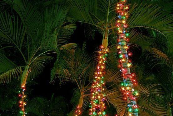 Image may contain: Conifer, Christmas Tree, Vegetation, Ornament, Lighting, Plant, Tree