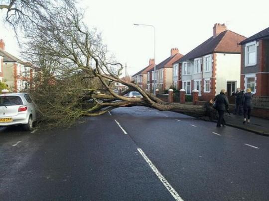 Fallen tree blocks the road in the Heath area