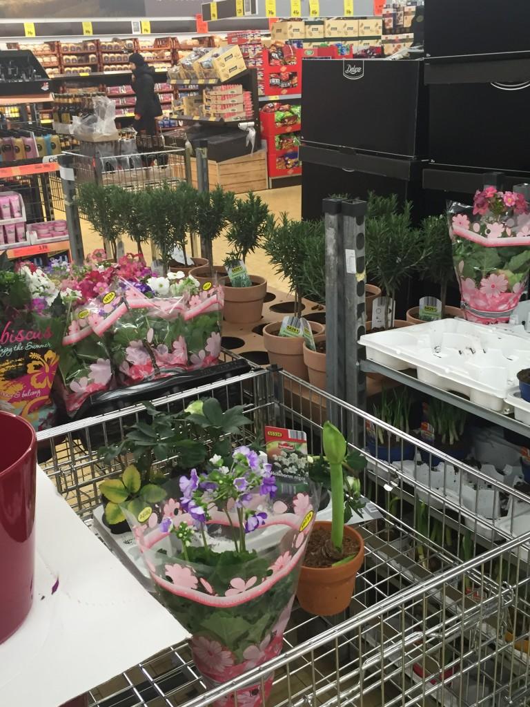 Is it a supermarket? Is it a garden center?