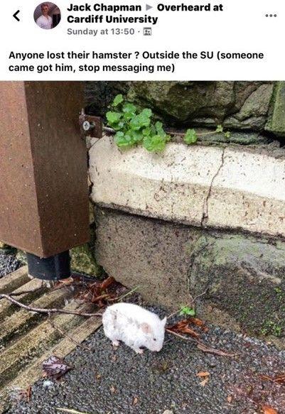 Image may contain: Mammal, Rodent, Rat, Animal, Rock