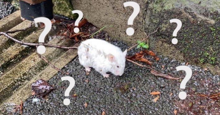 Image may contain: Person, Human, Hamster, Pet, Rodent, Rat, Mammal, Animal