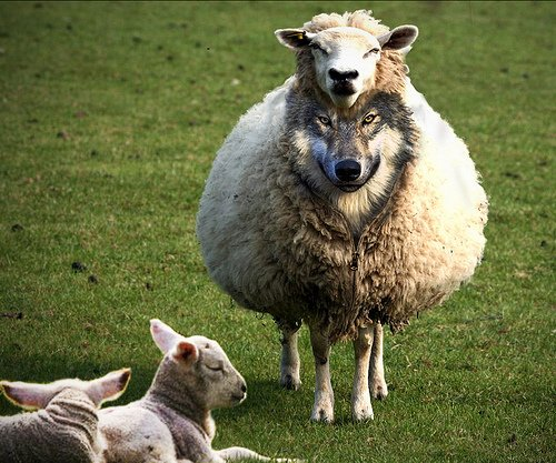 Wolf in sheep's clothing - surprisingly common
