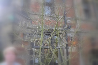 Tree 1 (2)