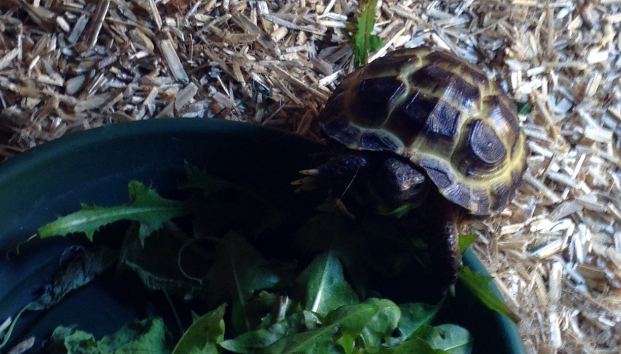 How to keep a tortoise in college university of cambridge solutioingenieria Images