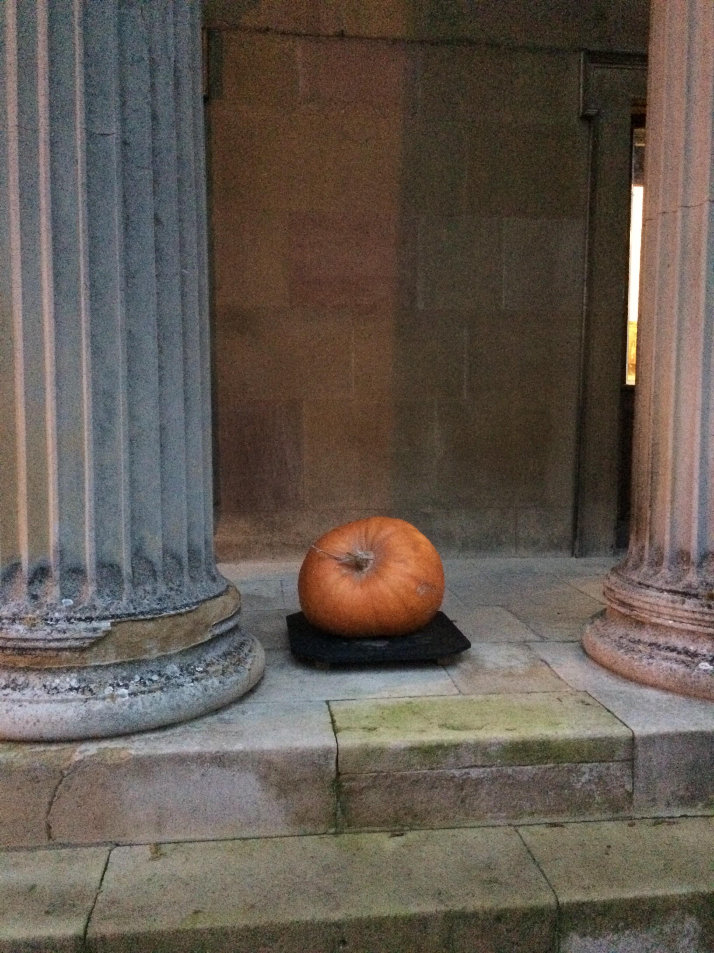 Just pumpkin around