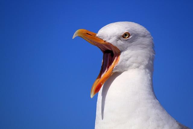 Less an albatross, more a seagul...