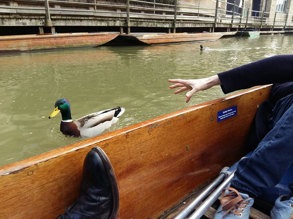 Why can't punters just be like this duck and simply get along?