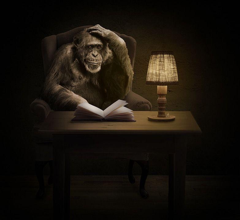 Image may contain: Lampshade, Lamp, Wildlife, Monkey, Mammal, Ape, Animal