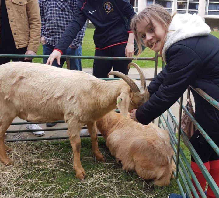 Image may contain: Goat, Animal, Sheep, Mammal, Person, Human