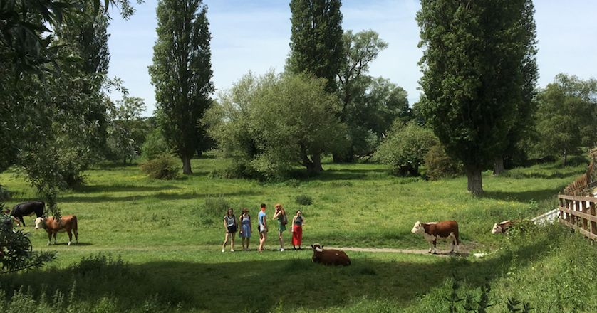 Image may contain: People, Horse, Land, Grazing, Ranch, Meadow, Pasture, Mammal, Animal, Cattle, Cow, Rural, Countryside, Farm, Grassland, Outdoors, Field, Nature, Human, Person
