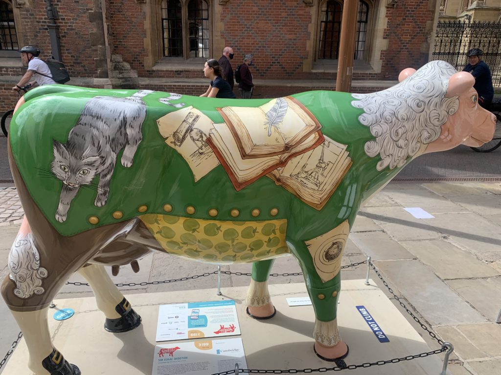 Cow statue made to look like Isaac Newton, with hair and waistcoat