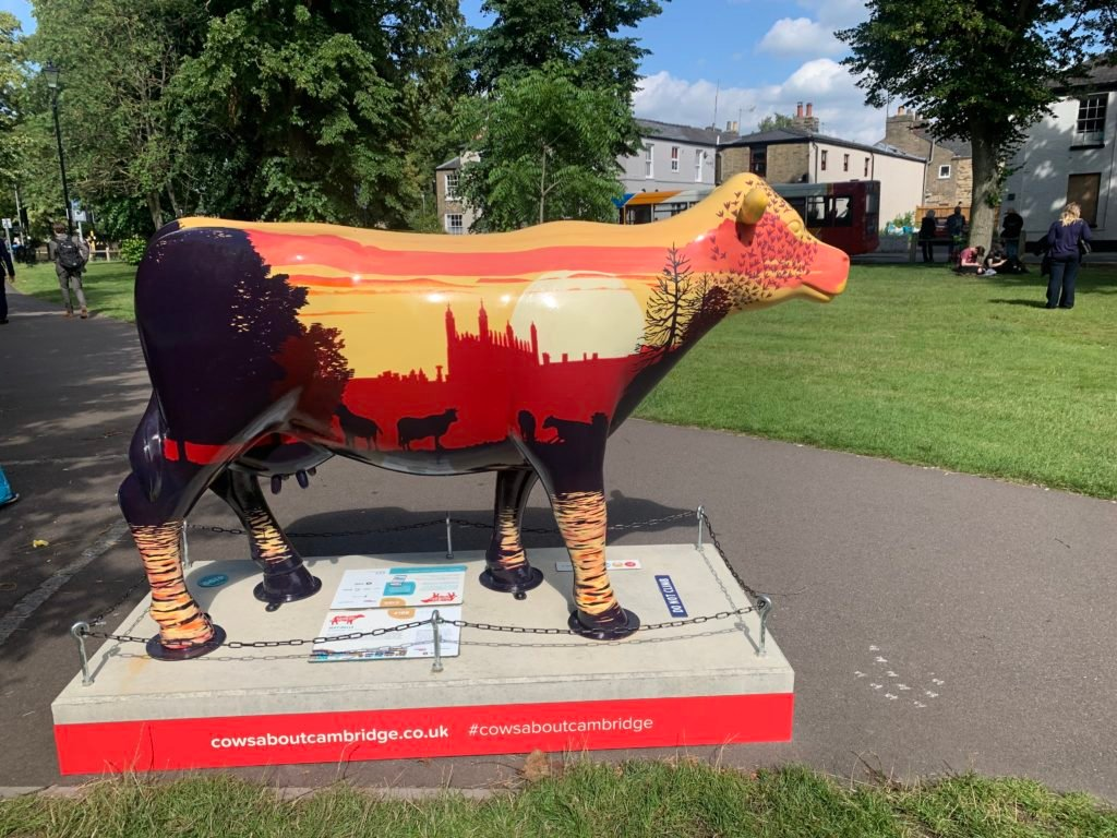 A cow painted with the sunset and a view of Kings College