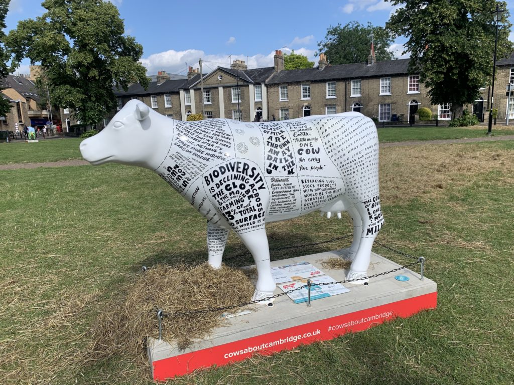 White cow covered in environmental messages