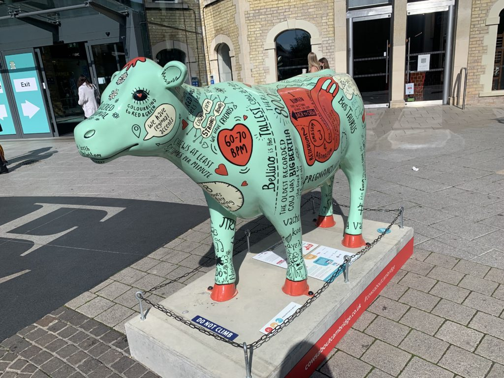 Mint coloured cow covered in cow facts