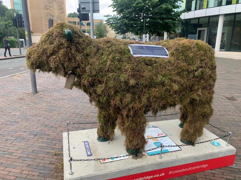 A cow made of moss