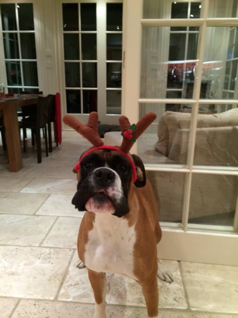 Tyler sporting sporty antlers
