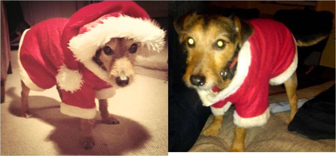 Jack as Santa Paws