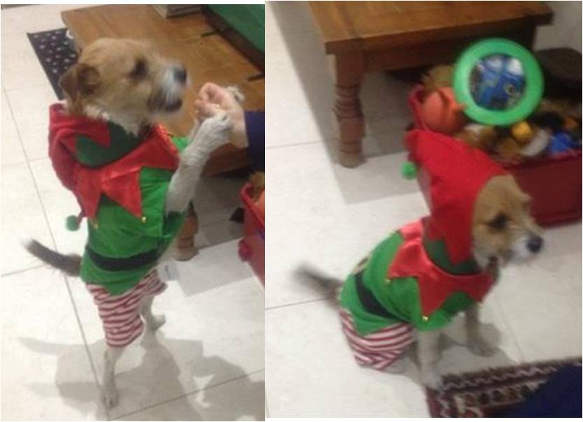 Patch flaunts his high elf-esteem