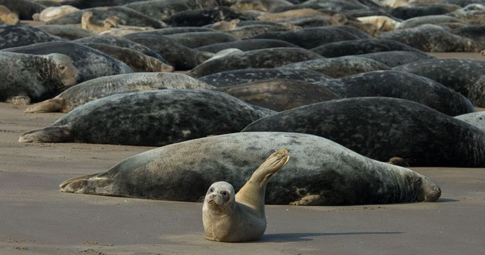 Image may contain: Seal, Sea Life, Mammal, Animal