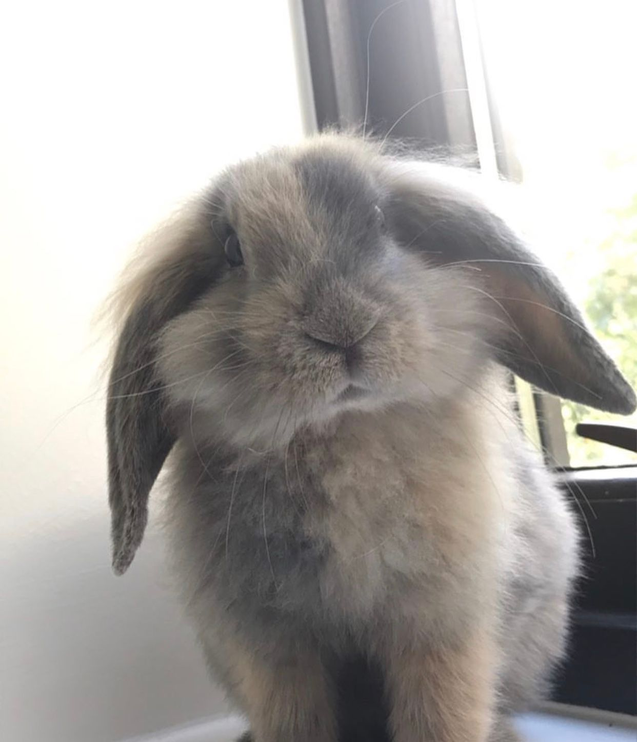 Image may contain: Rodent, Rabbit, Mammal, Bunny, Animal