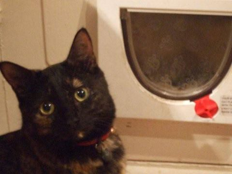 Jiji was found decapitated near her home on May 22nd