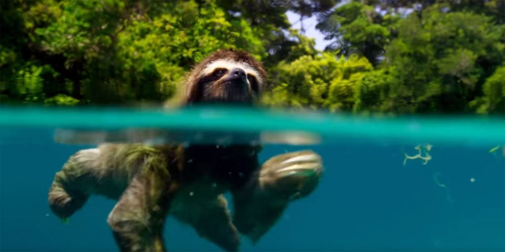 Look at this fucking sloth I'm so happy rn