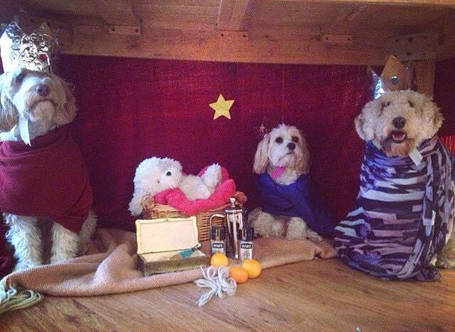 dog-nativity