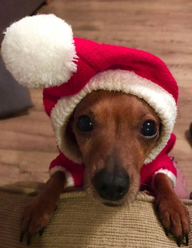 2016 hasn\'t been great, so here\'s some dogs in Christmas outfits