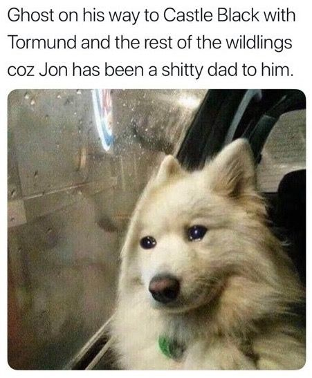 Image may contain: Game of Thrones season 8 episode 4 memes, Game of Thrones memes, Game of Thrones, GoT, meme, Ghost, tweet, reaction, Twitter, Starbucks cup, Sansa, The Last of the Starks, season 8 episode 4, Arya, Gendry, Bran, Jon, Eskimo Dog, Dog, Pet, Canine, Animal, Mammal