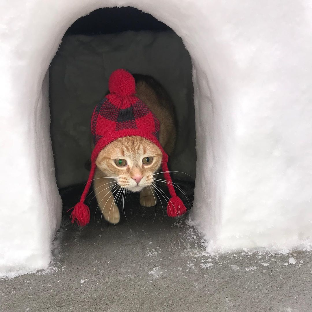 Tik Tok cat, Tik Tok, mr sandman, cat, video, viral, funny, trend, twitter, meme, tik tok cat examples, mr sandman cat, funny cat video, weird video, viral video, mr sandman video, jade, captions
