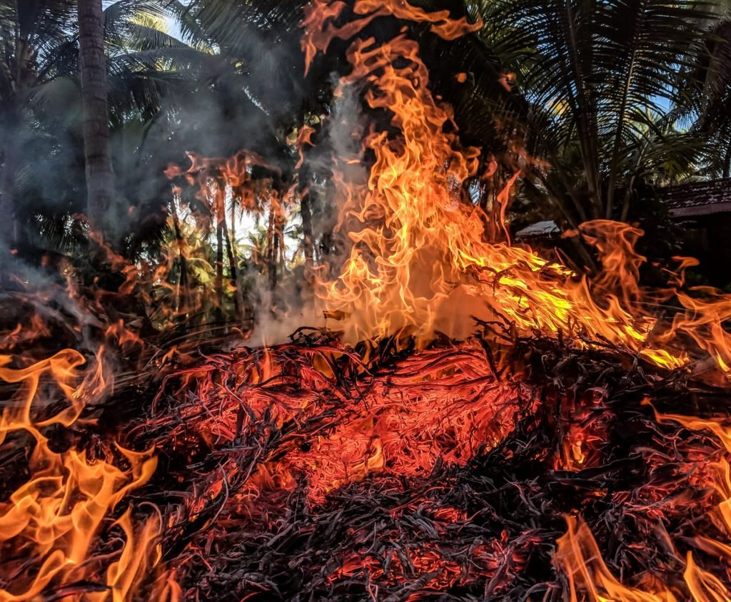 how to help the amazon rainforest, amazon fires, the amazon, amazon, rainforest, wildfire, climate change