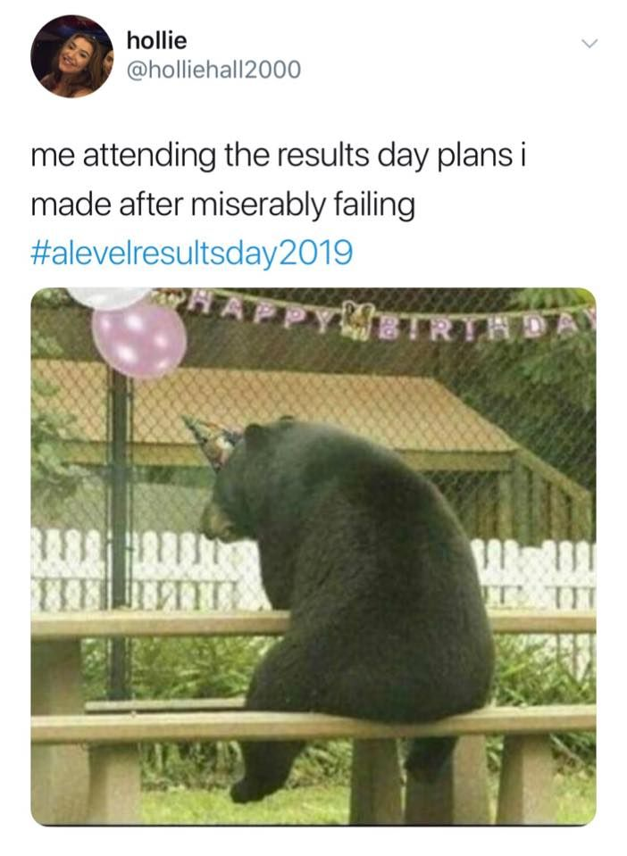 Image may contain: A-level results day memes, A-level results, A-Level, results day, memes, 2019, meme, twitter, tweet, reaction, fail, plans, results, day, cry, student, course, University, grade, degree, college, Wildlife, Bear, Mammal, Person, Human, Zoo, Animal