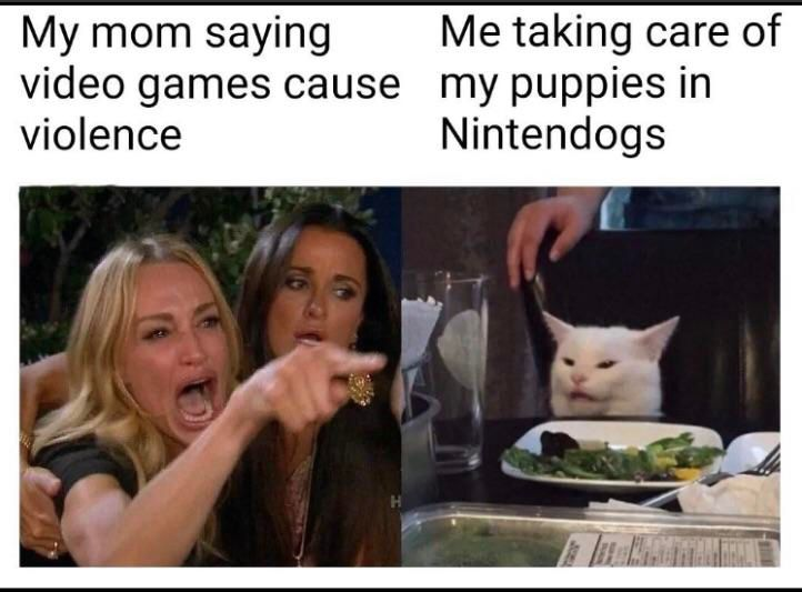 Image may contain: best woman yelling at cat memes, woman yelling at cat meme, cat, memes, best, funniest, examples, tweet, Twitter, reaction, Dish, Drink, Beverage, Animal, Pet, Cat, Mammal, Face, Food, Meal, Person, Human