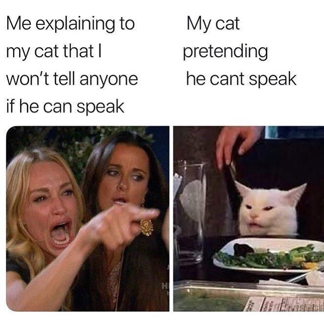 Image may contain: best woman yelling at cat memes, woman yelling at cat meme, cat, memes, best, funniest, examples, tweet, Twitter, reaction, Female, Drink, Beverage, Animal, Mammal, Cat, Pet, Face, Food, Meal, Human, Person