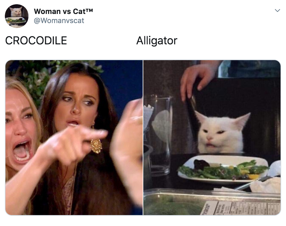 best woman yelling at cat memes, woman yelling at cat meme, cat, memes, best, funniest, examples, tweet, Twitter, reaction,