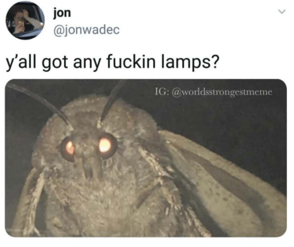 Meme of the decade vote, meme of the decade, meme, best, vote, 2010s, 10 years, ever, moth, lamp