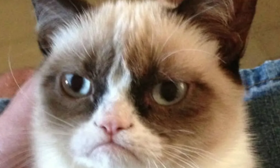 Meme of the decade vote, meme of the decade, meme, best, vote, 2010s, 10 years, ever, grumpy cat, cat