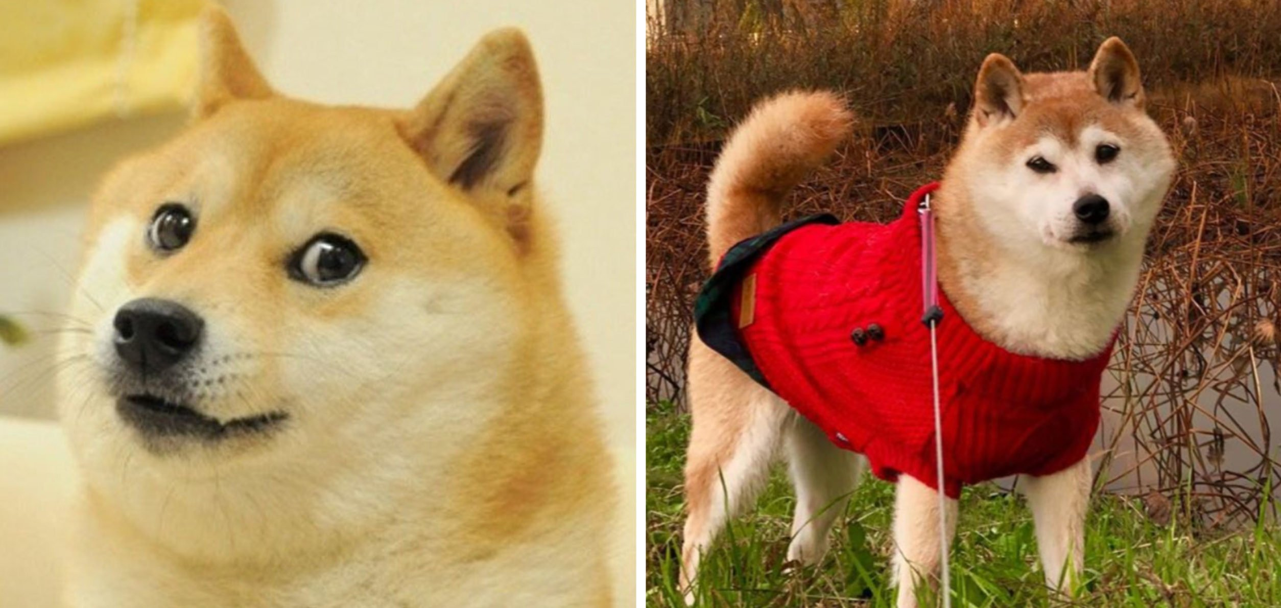 The Unexpectedly Wholesome Backstory Of The Doge Meme