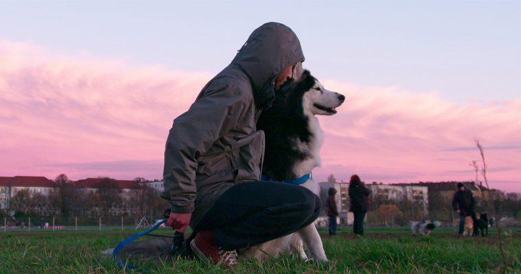 Dogs, Netflix