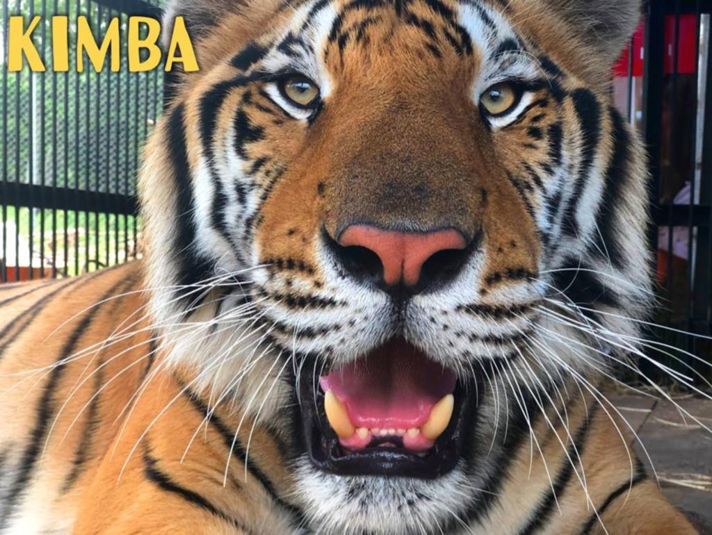 Carole Baskin, zoo, tiger, volunteer, injured, Big Cat Rescue, arm, torn off, tore, hospital, latest