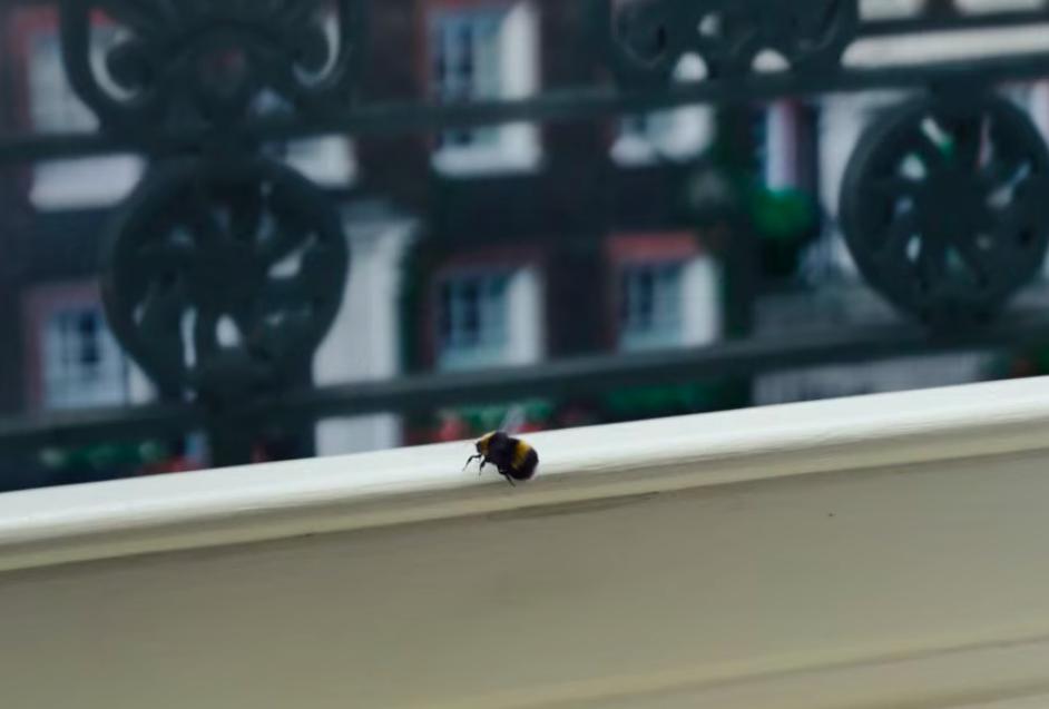 bridgerton bee