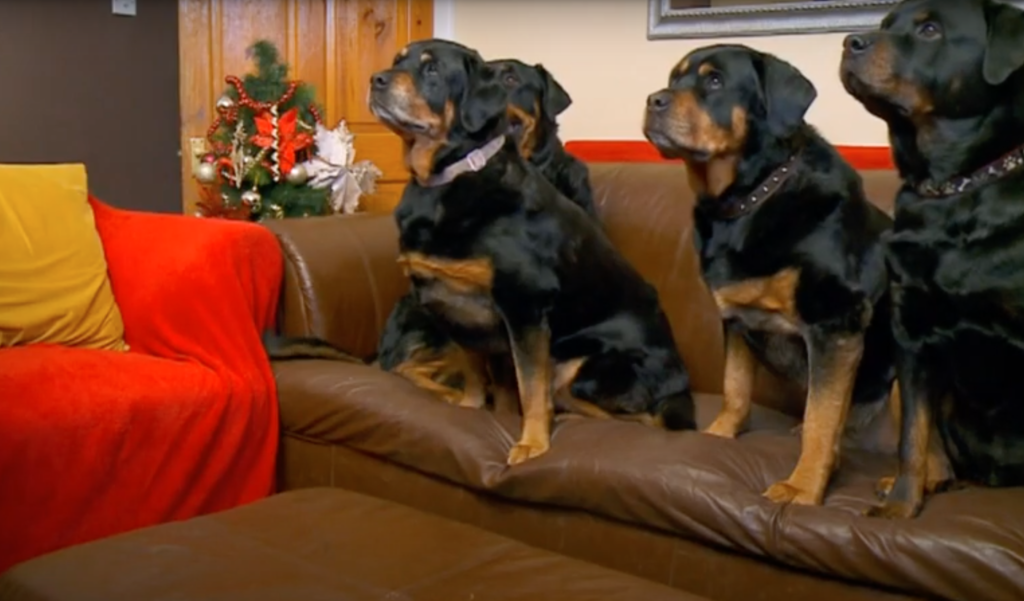 malones-dogs-gogglebox-best-thing-on-tv-right-now