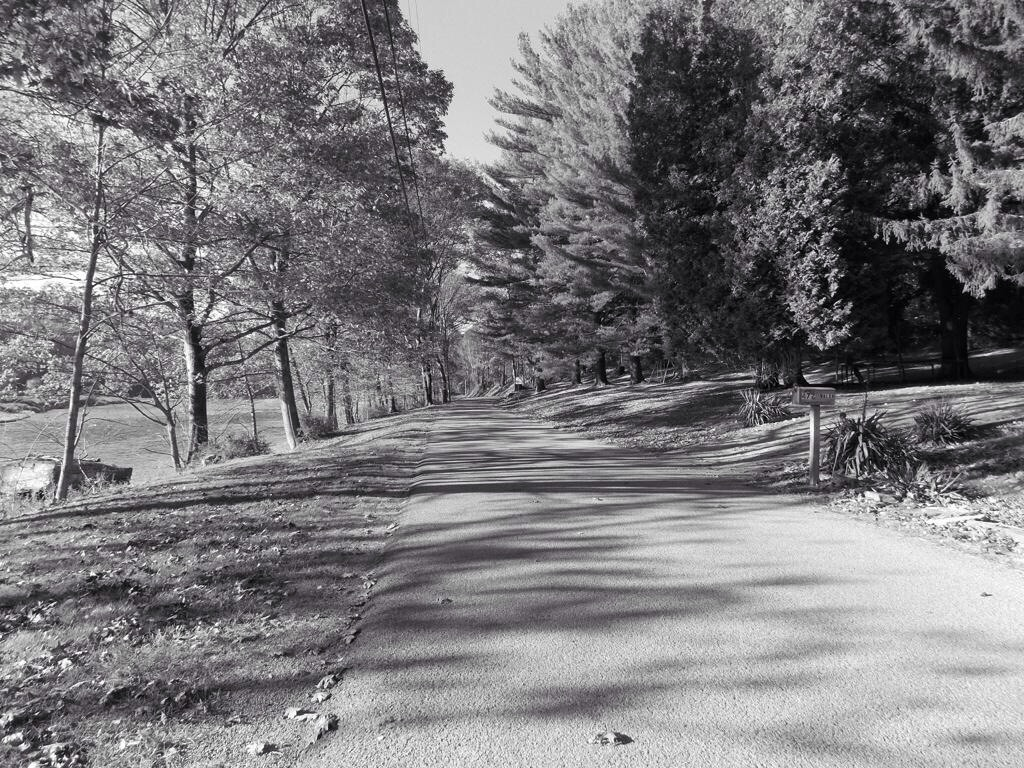A picture I took, I call it the road less traveled by
