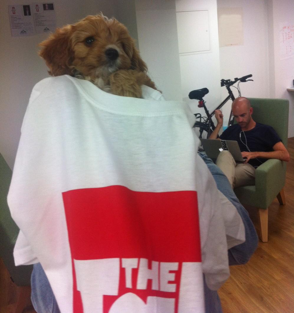 Tab dog 1 Charlie