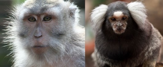 Newcastle Uni euthanised macaques (left) and marmosets (right)