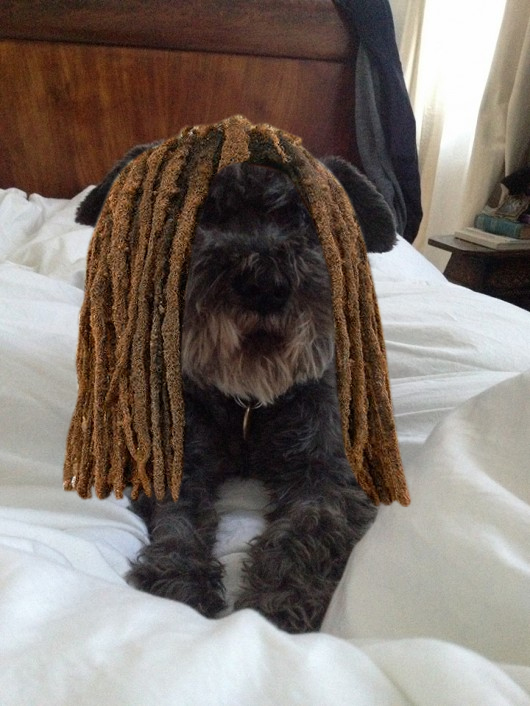 Ok, so we photoshopped the dreadlocks on